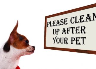 Why Do Dogs Eat Poop And How To Stop It?