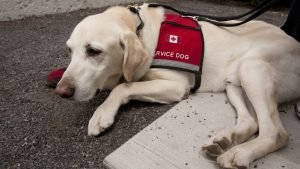Emotional Support Dogs Vs. Service Dogs - What's The Difference?