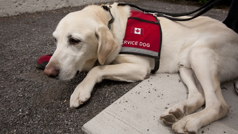 Emotional Service Dog Trained Tasks