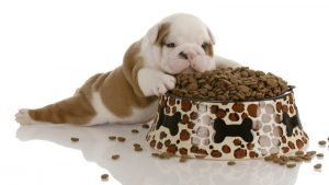 How To Select The Best Dog Food For Your Money