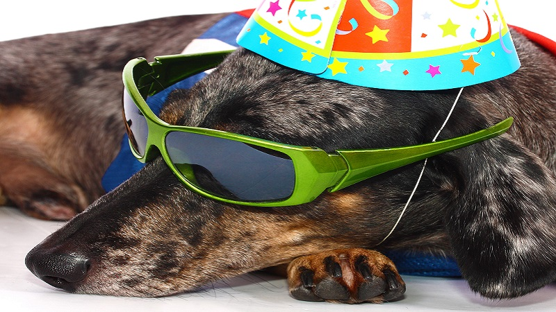 Is One Dog Year Equal To Seven Human Years?