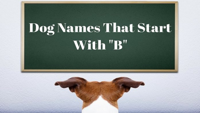 A list of male and female dog names that start with B