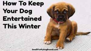 Some tips and advice on how to entertain your dog this winter.