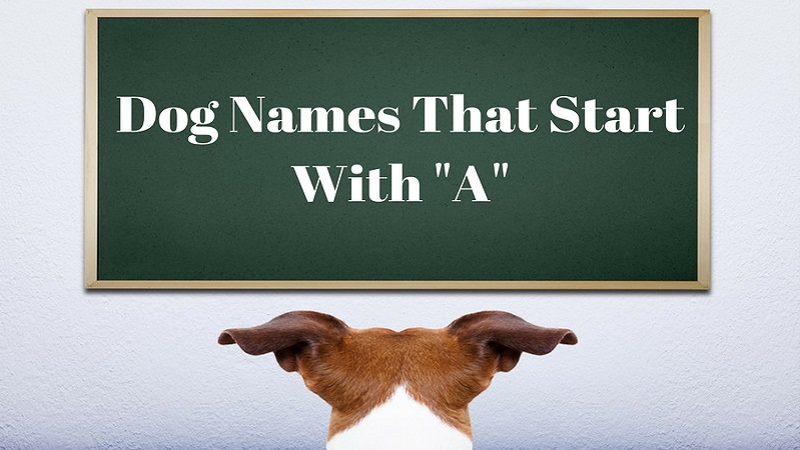 A list of male and female dog names that start with A