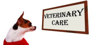 How to know when to call the vet for a sick dog