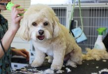 A look at the pros and cons of mobile dog grooming services