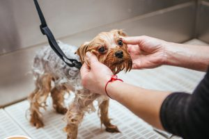 A simple yet effective recipe for homemade dog shampoo for fleas and sensitive, itchy skin