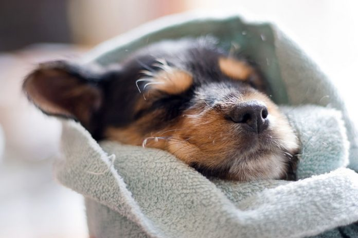 A few tips on how to help children prepare for a puppy