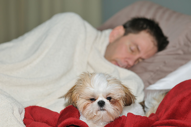 Answering the question of whether sleeping with your dog is a good idea