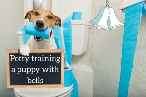 Header image for article on puppy potty training with bells