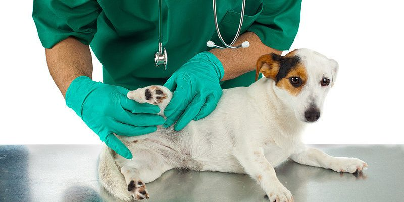 Some tips on how to prevent dog joint problems