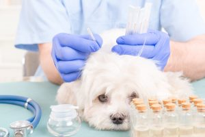 A look at acupuncture for dogs and its use in veterinary practice