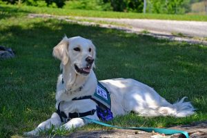A look at 7 different types of service dogs and the tasks they perform