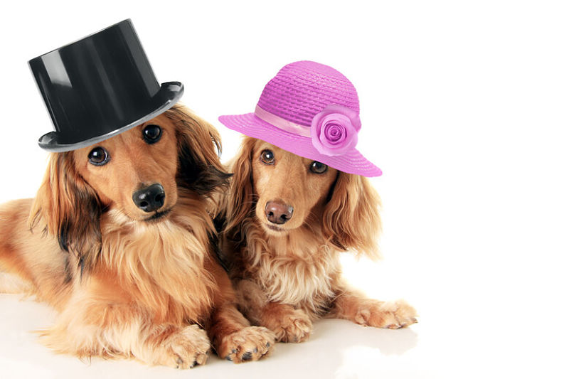 Featured image for an article looking at whether you should get a male or female dog.